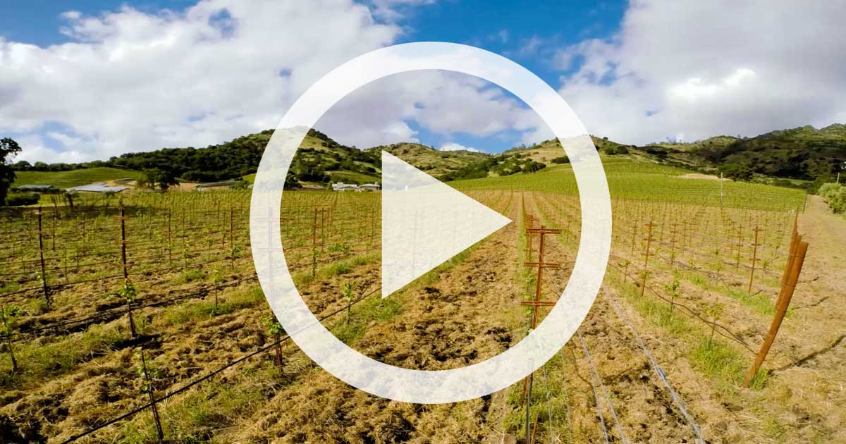 Video: Replanting a Vineyard — Three Years in Two Minutes